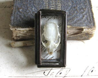 Tiny Natural History Pocket Museum - Glass Box Assemblage Art Object - Rodent Skull