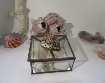 Vintage Glass Box With Large Cowrie Shell Copper Edges Filled with Shells 5 by 5 Mirrored Bottom