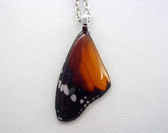 Real Butterfly Wings Danaus Chrysippus Forewing Real Butterfly Wing Necklace