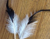 BEST SELLER- LOT 13- 2 Pcs, Beautiful Black, Green and White Tail Feathers, Real Feathers, Craft Feathers, Millinery Feathers, Costume