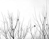 black and white birds on branches photo, bird flying photograph fine art home decor, minimalist minimalism photography bare tree bedroom art