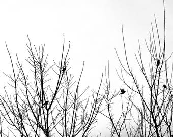black and white birds on branches photo, bird flying photograph fine art home decor, minimalist minimalism photography bare tree bedroom art