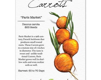 Carrot Seeds, Paris Market (Daucus carota) Non-GMO Seeds by Seed Needs