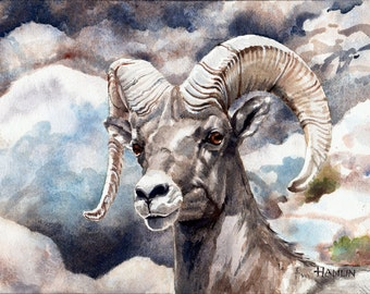 Bighorn Ram Study - Open edition print of an original watercolor (fits 11x14 frame)