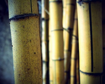 Bamboo forest, Fine Art Photography, Print art, Nature Photography, Art Deco, Wall Art, Nature Art, Digital Art, Signed, Free shipping