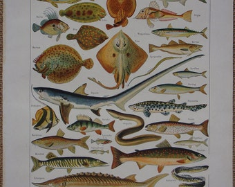 Vintage French original book print FISH 'Poissons' illustration by Adolphe Millot Nouveau Larousse Universel Published 1949