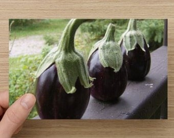 Eggplant Photo ~Trio of Purple Eggplants Food Photography on Blank Note Card -  Men in Hats - Kitchen Art - All Occasion Note Card