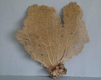 "13.7"" x 14.8"" Large Pink Seashells Reef Coral"