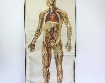 SALE XL Vintage Pull Down Chart, Anatomy Human Body, Biology Print