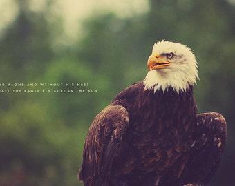 Eagle Photography, Eagle Art, Eagle Print, Eagle Soar, Eagle Eye, Eagle Photo, Bird Photography, Eagle Art Print, Eagle Wall Art