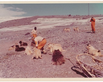 Dog Team Antarctic Expedition abstract color vintage photo photography social realism found snapshot Lindblad Expedition