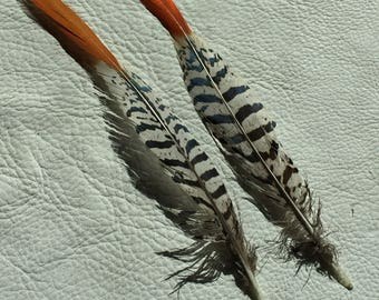 2 lady amherst feathers, craft supply, supply, feather