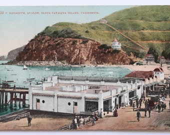 Avalon Aquarium Santa Catalina Island Postcard 1907 - 1915