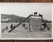 Original Vintage Photograph The Dog Park