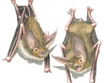 Bechstein's bats Greeting Card (code MB21)