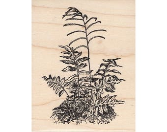 Tall Fern 950K Beeswax Rubber Stamps Unmounted, Cling, Mounted Stamp Scenic, Landscape Stamping