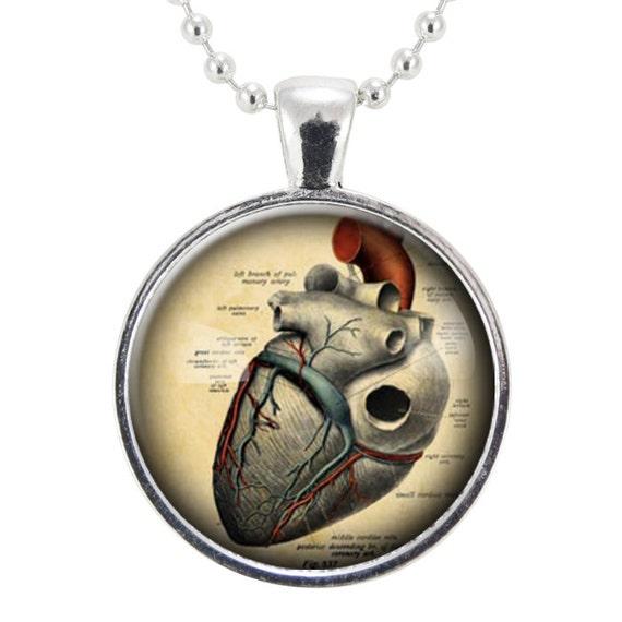 Anatomical Heart Necklace, Gothic Jewelry, Anatomy Pendant, Goth Fashion (1125S25MMBC)