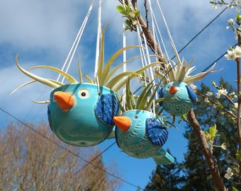 Medium Bluebirds of Happiness Hanging Planters, Air Plants, Succulents, Birders