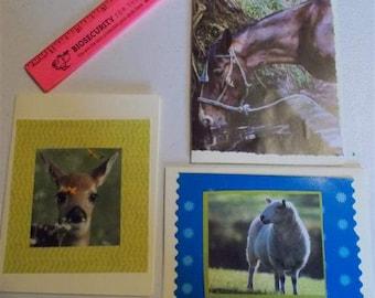 Animal Greeting Card  Fawn Card   Sheep Card  Horse Card  Friendship Card  Birthday Card  EcoFriendly Cards  FREE US Shipping