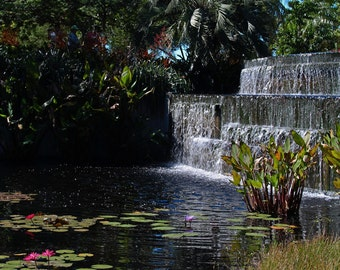 The Naples Botanical Garden IV (FREE SHIPPING in the U.S. only)