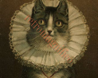 Cute Cat with Elizabethan ruff collar image from 1800's digital download art print, for framing, collage, mixed media, altered art,