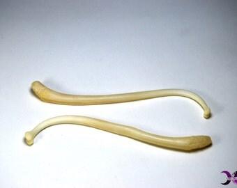 Raccoon Penis Bone