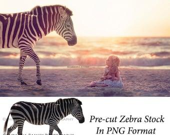 Pre-cute Zebra Stock PNG