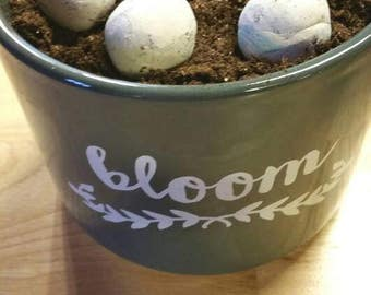 Eco-Friendly Wildflower Seed Bomb Set ~ Perfect for Gifting!