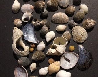 Beach Shells, New England