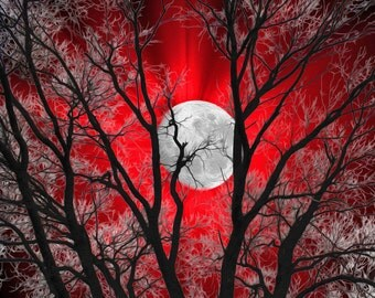 Contemporary Red Wall Art Photography For Bedroom/Tree Moon Home Decor Matted Picture