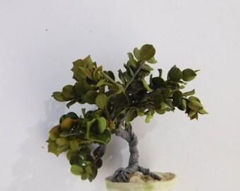 144 scale Shade Tree or Bonsai