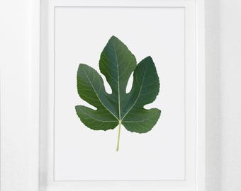 Fig Leaf, Leaf Photography, Digital Leaf Art, Downloadable Botanical Prints, Leaf Art Prints, Fig Tree Art, Botanical Leaf Art, Leaf Decor