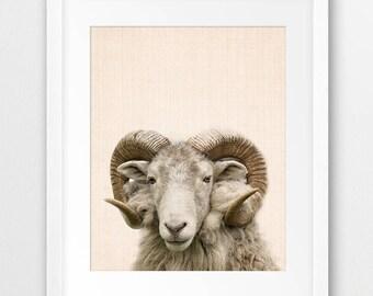 Sheep Print, Nursery Animal Wall Art, Sheep Big Horn, Mountain Sheep, Farm Animal, Nursery Decor, Sheep Photography, Kids Room Printable Art