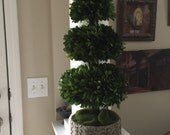 Boxwood Cone Topiary in Stone Urn