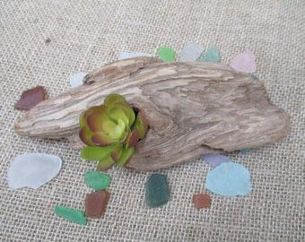 "FREE SHIPPING =  Driftwood Table Decoration or Air Plant Holder ""Nautical Style"""