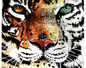 Tiger/White Tiger
