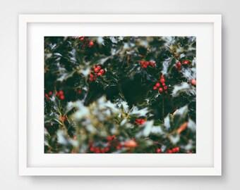 Photography Prints, Photography, Printable Art, Wall Art, Art Prints, Wall Decor, Nature, Winter, Christmas Art, Mistletoe