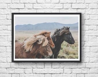 Art-Poster 50 x 70 cm - Iceland Savage Horses