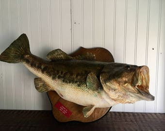 Taxidermy Bass Fish