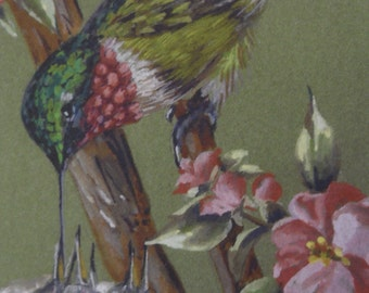 Ruby throat Hummingbird bird Nest Spring Landscape Framed Print