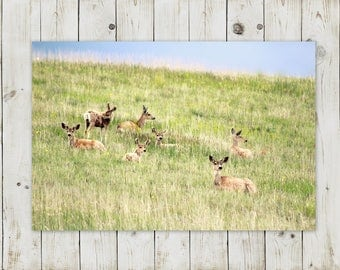 Field of Deer | Mountain Wildlife Decor | Digital Download Photography | Printable in various sizes: 5x7, 8x10, 11x14, 16x20, 20x30