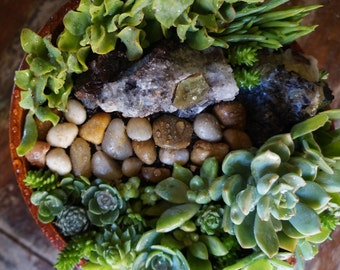 Raw Citrine Gemstone Succulent Garden