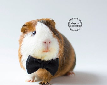 Bow tie for guinea pig
