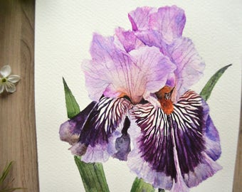 Original watercolor painting| Iris painting| Flower watercolor| Small painting| Original watercolor| Bright painting| Purple iris 2