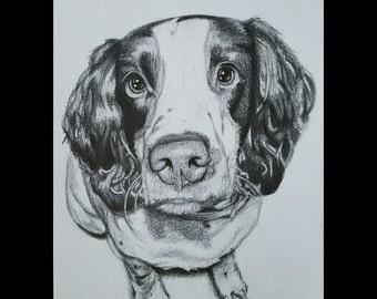 Custom Hand-drawn Pet Portrait