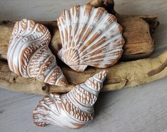 Three ceramic shells wall decor