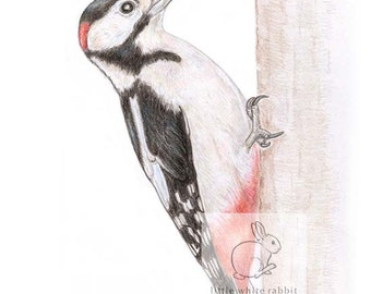 Woodpecker Blank Card