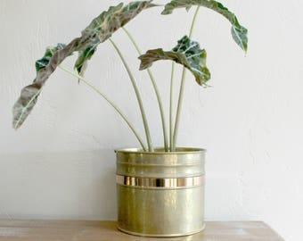 Brass Planter, Hammered Brass Planter, Brass Plant Pot, Brass Plant Holder Indoor Planter Copper Floor Planter Decorative Planter Garden Pot