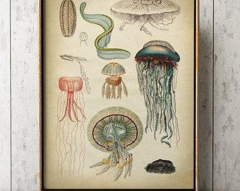 Jellyfish print, jellyfishes chart, marine creatures poster, marine decor, beach home wall decor,