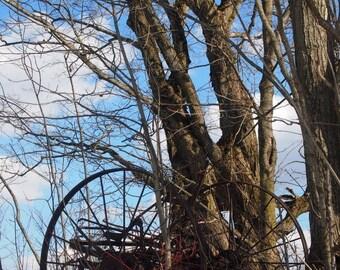 Old farm, forest, woods, countryside, tree, trees, snow, winter, landscape, original art, upstate New York, oak tree, spring, farm, farmland